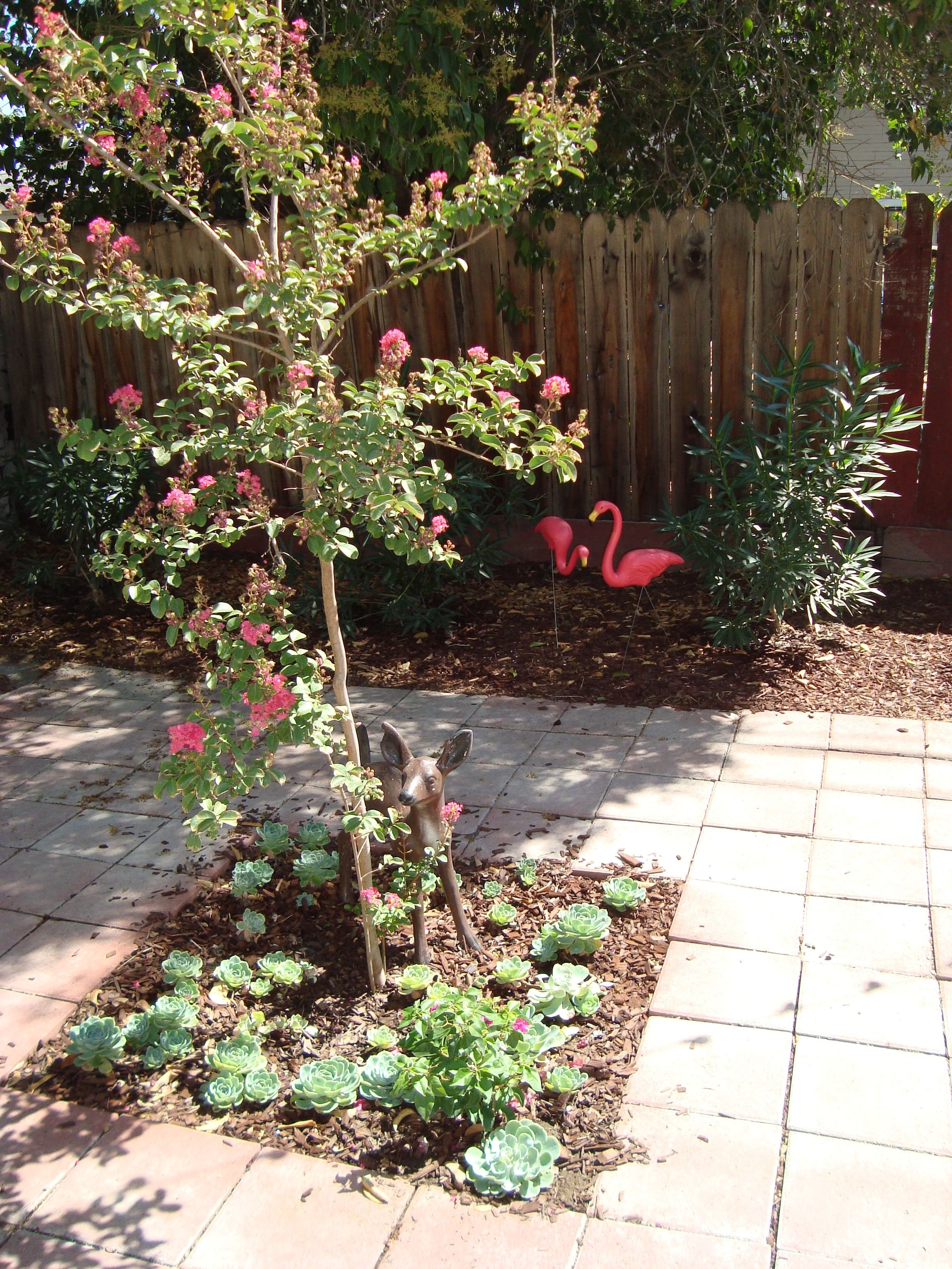 Crepe myrtle, oleander, and pink flamingos!